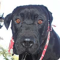 Adopt A Pet :: Johnny depp - Scottsdale, AZ