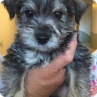 Adopt A Pet :: Willie - Canoga Park, CA