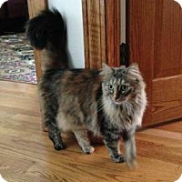 Adopt A Pet :: Betty - West Dundee, IL