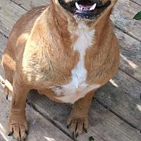 Adopt A Pet :: Trixie - Staunton, VA