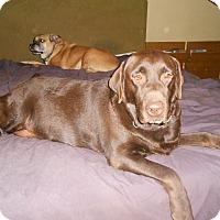 Adopt A Pet :: Zeus - North Jackson, OH