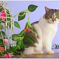 Adopt A Pet :: Megan - Culpeper, VA