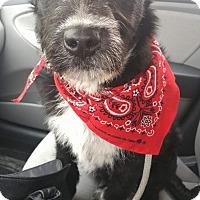 Adopt A Pet :: Jagger - Ogden, UT