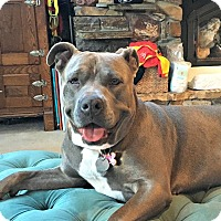 Adopt A Pet :: Callie - Red Bluff, CA