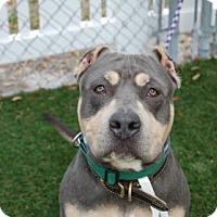 Adopt A Pet :: Jericho - Bradenton, FL