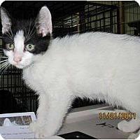 Adopt A Pet :: Kirby - Catasauqua, PA