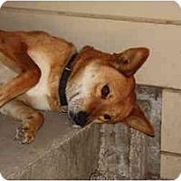 Adopt A Pet :: Scaper - Marysville, CA