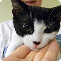 Adopt A Pet :: Cheech - Naples, FL