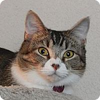 Adopt A Pet :: Mollea - Franklin, NC