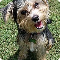Adopt A Pet :: Marty - Baton Rouge, LA