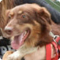 Adopt A Pet :: Garmin - Antioch, IL
