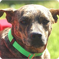 Adopt A Pet :: Ty - Simsbury, CT