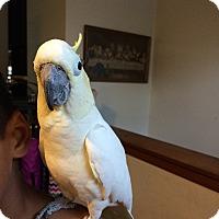 Adopt A Pet :: Darwin - Lenexa, KS