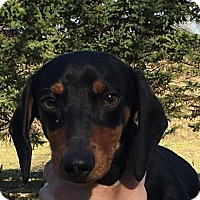 Adopt A Pet :: Bockvier Von Weisswurst - Marcellus, MI