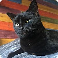 Adopt A Pet :: Yujin (Purr Baby) - Santa Ana, CA