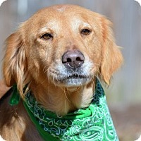 Adopt A Pet :: Rosie - New Canaan, CT