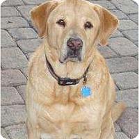 Adopt A Pet :: Duke - Altmonte Springs, FL