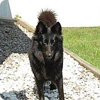 Adopt A Pet :: Bella - Douglas, ON