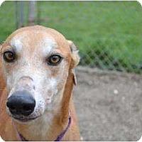 Adopt A Pet :: Sambam (Sambamcunningham) - Chagrin Falls, OH