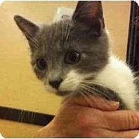 Adopt A Pet :: Noah - Modesto, CA