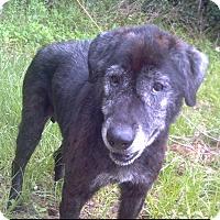 Adopt A Pet :: Monte - Orange Lake, FL