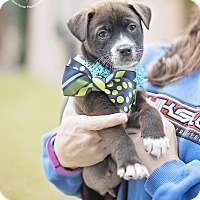 Adopt A Pet :: Tubby - Kingwood, TX