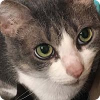 Adopt A Pet :: Cindy - Seminole, FL