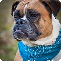 Adopt A Pet :: Maggie - Dallas, TX