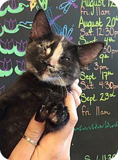 Domestic Shorthair Cat for adoption in Sacramento, California - Annie