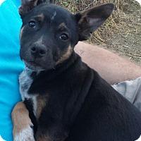 Adopt A Pet :: Laredo - Orange Lake, FL
