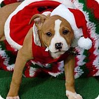 Adopt A Pet :: aliza in CT - Manchester, CT