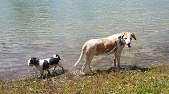Hound (Unknown Type) Mix Dog for adoption in Malabar, Florida - Lance