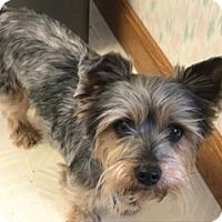 Adopt A Pet :: Layla-Pending Adoption - Omaha, NE