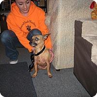Adopt A Pet :: DELYLA - Port Clinton, OH