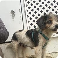 Adopt A Pet :: Dixie (ETAA) - Hagerstown, MD