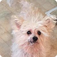 Adopt A Pet :: Pilar - Bucks County, PA