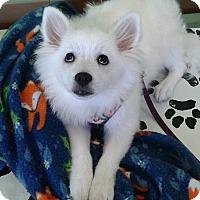 Adopt A Pet :: April - St. Louis, MO