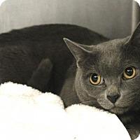 Adopt A Pet :: Abby 35317981 - Westampton, NJ