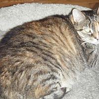 Adopt A Pet :: Gray - Kensington, MD