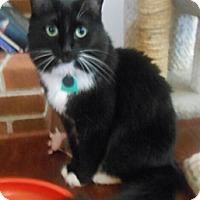Adopt A Pet :: Abby - Reston, VA
