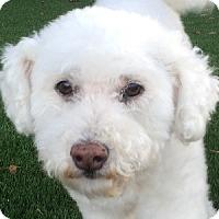 Adopt A Pet :: Kyra - La Costa, CA