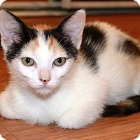 Adopt A Pet :: Maggie - Irvine, CA