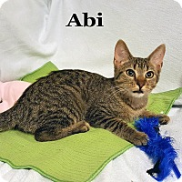 Adopt A Pet :: Abi - Bentonville, AR