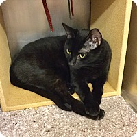 Adopt A Pet :: Sidd - Colmar, PA