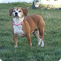 Adopt A Pet :: Pixie - New Oxford, PA