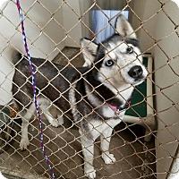 Adopt A Pet :: Mya - Geneseo, IL