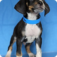 Adopt A Pet :: Herman - Waldorf, MD