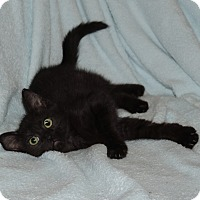 Adopt A Pet :: CAMERON - LOOKS AND PERSONALIT - Plano, TX