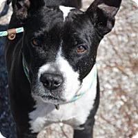 Mixed Breed (Large) Mix Dog for adoption in Bradenton, Florida - Pudge