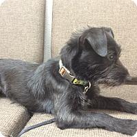 Adopt A Pet :: Annabel - Seattle, WA